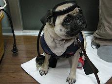 ダイバー犬