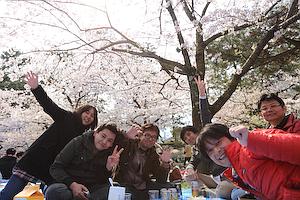 夙川公園花見
