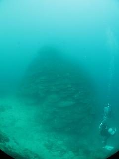 牟岐 オオハマサンゴ